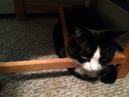 MuMu loves to be under the chair and resting on the stretchers