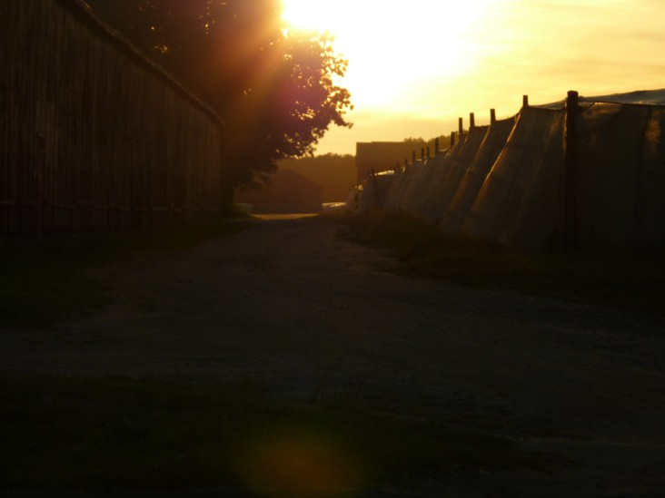 Sun setting behind and in between the tobacco fields and barns