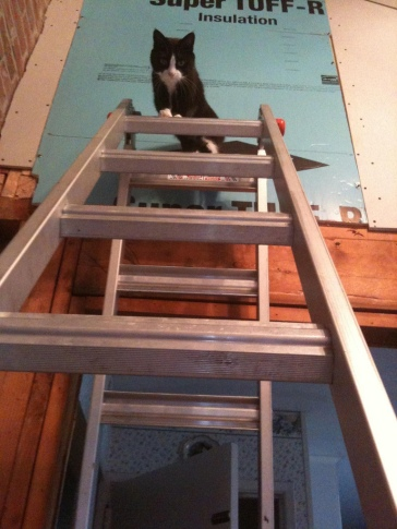 While we were still renovating the room, MiMi enjoyed exploring the heights.