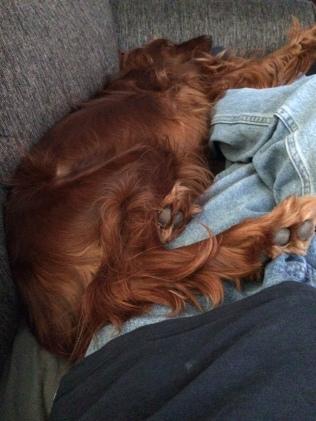 Maddie sprawled on couch