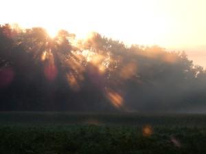 Sun's rays burning through fog.
