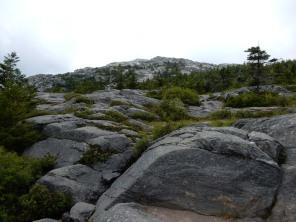 Looking toward the summit