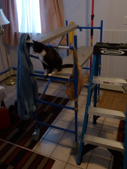 cat on scaffold