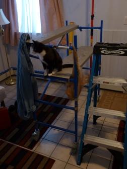 cat on scaffold