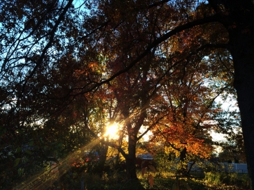 Setting sun through my neighbor's trees.