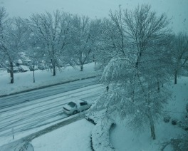 From my office, I could see that the snow was piling up nicely.