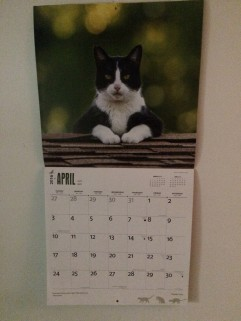 We always have a Tuxedo Cat calendar in our house. How could we not?