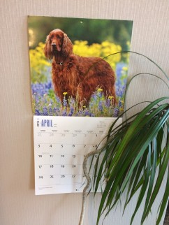 The Irish Setter calendar is one that traditionally hangs in my office at work.