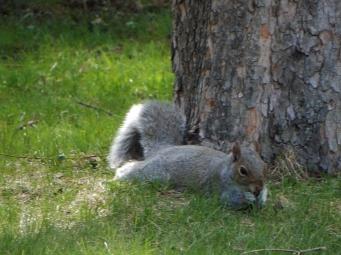 Mom Squirrel