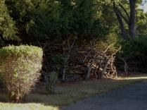 Bare bushes