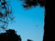 Bug in web