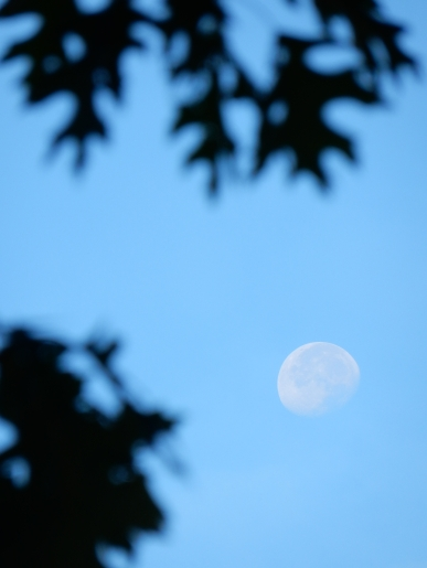 moon and branch