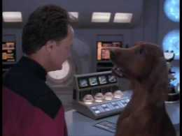 Q and Dr. Crusher as an Irish Setter