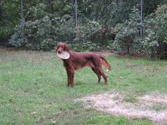 Mollie loved to play Frisbee