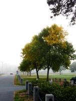 A little bit of color peeking through the fog.