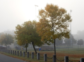 You have to get pretty close in the fog to see the color.