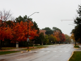Iowa seems to be a little bit ahead of the east coast with respect to fall color.