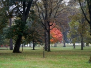 The park was mostly still green, except for this bright shining tree.