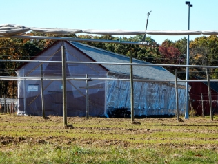 Tobacco barn wrapped in plastic