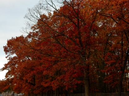 The branches are showing through, but the color is amazing.
