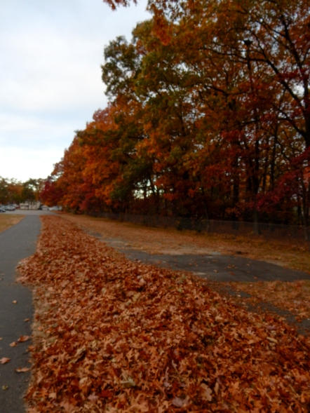A lot of leaves have fallen