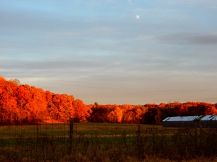 As late as early November, we were still being treated to stunning color.