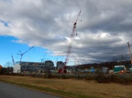 """""""Quick, get my camera - cranes! Cranes!"""""""