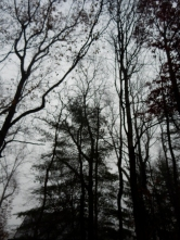 There is a squirrel in this picture. He's also gray.
