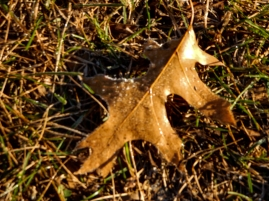 This turned out nice, but the frost had mostly melted by the time I got my camera.