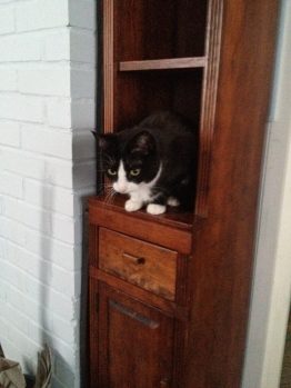 When we put the furniture back in the family room (room with stove), MiMi claimed the bookcase.