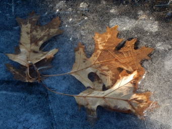 We have been having a freeze/thaw cycle every night and morning this week.