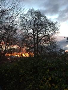 Sunrise while walking Maddie.