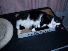 "MuMu - ""This box is a little small, but it works."""