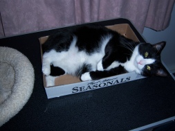 """MuMu - """"This box is a little small, but it works."""""""