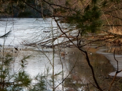 This pond is getting its winter coat of ice.