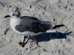 I think this is a gull (it probably has a formal name).