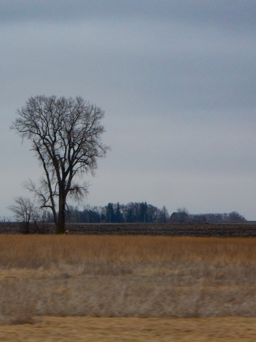 A lot of these big empty fields had a lone bare tree standing in the middle.