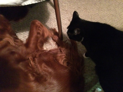 """""""Pssst, don't go to sleep. We have to keep working on him. I need to be brushed. You need a walk. Now, get up!"""""""
