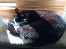 In lieu of a fire, MiMi found a sunny window shelf