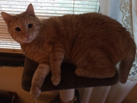 """""""Why did you make me leave my chair? I don't really fit on this shelf."""""""