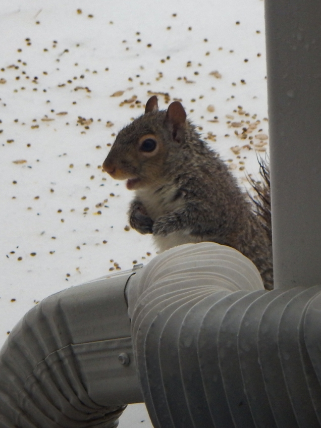 We had two baby squirrels become orphans recently. They seem to be doing alright now (with a little help from the Mrs.)