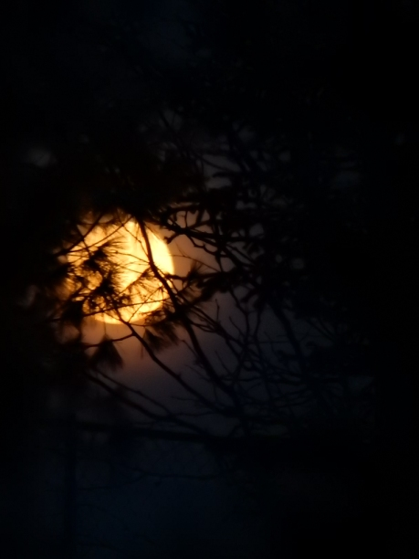 In a few weeks, you won't even be able to tell the moon is there, because the leaves will fill out.