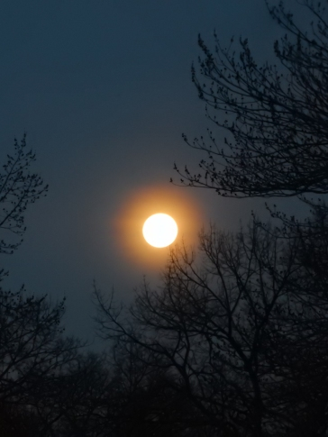 This full moon almost looked like a sunset.