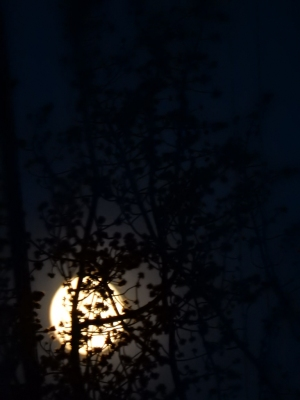 The moon kept getting lower as I approached the safe place to park.