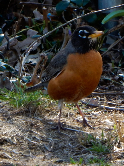 Hello Mr. Robin. Welcome back.