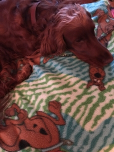 Maddie likes her Scooby Doo blanket