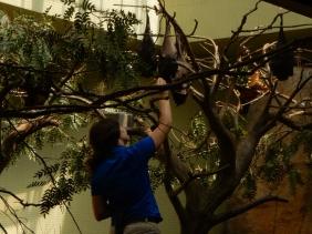 Feeding the bats