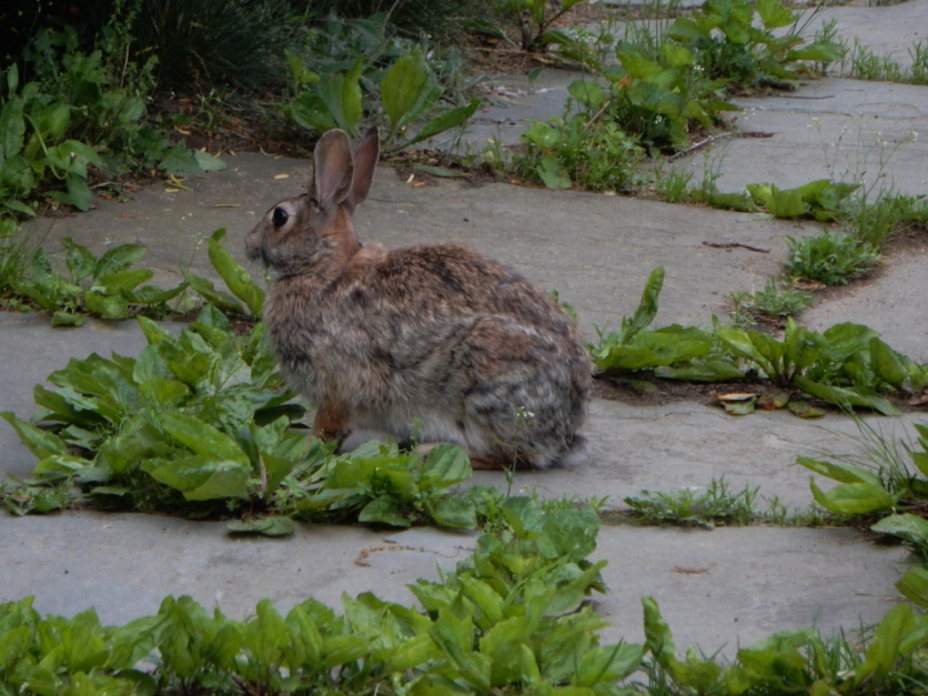 """""""Yes, I left those weeds there because I'm told yo like to eat them."""""""