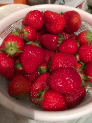 Fresh strawberries. We've been picking at these all day.