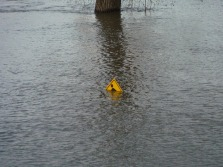 That poor guy is on the sidewalk at Great River Park. the park is flooded. He might be going under.